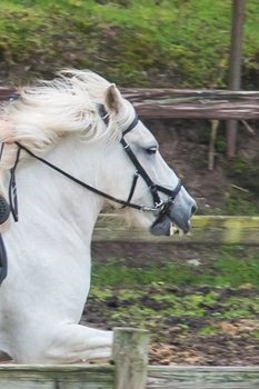 Competition Multi Bridle / Allround hoofdstel Westeind